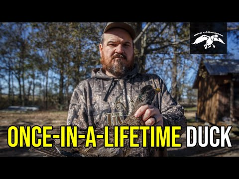 Justin Martin Takes Down RARE Duck   Louisiana & Arkansas Duck Hunt
