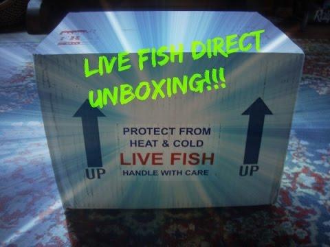 Live Fish Direct Unboxing | Aulonocara stuartgranti | Ngara Flametail  Cichlid
