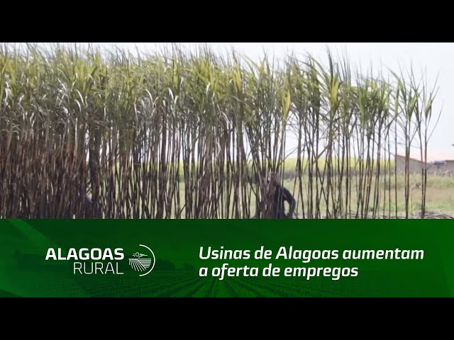 Com o início da safra, Usinas de Alagoas aumentam a oferta de empregos no campo