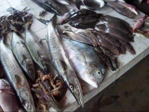 Kribi et les poissons du débarcadère au Cameroun