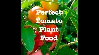 Perfect Tomato Plant Food~