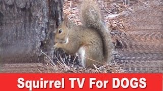 Squirrel Tv - A Film For Dogs