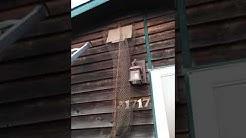 Safe bat trap.