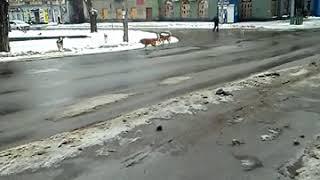 Кривой Рог бездомные собаки