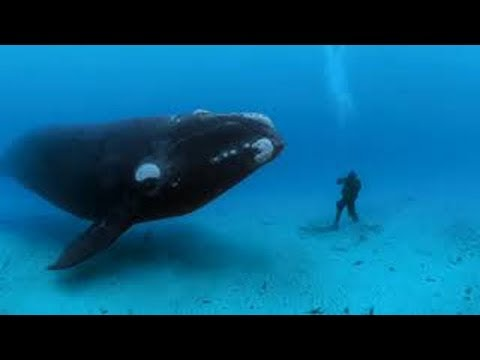 Whale carries woman on back for a long time and when she understood why she was shocked