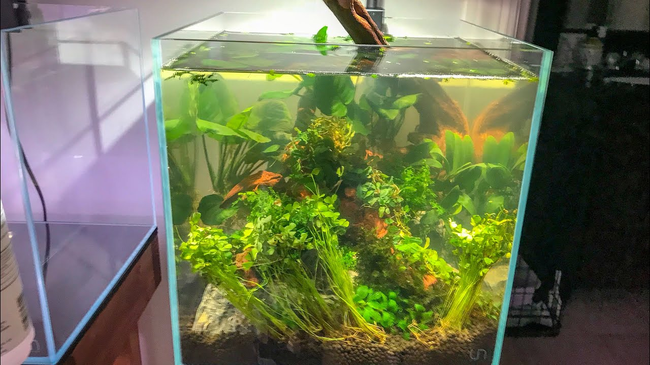 EASY BEGINNER NANO AQUASCAPE - YouTube