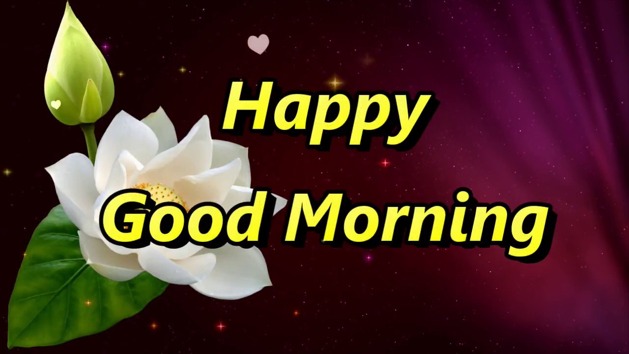 Good Morning Wishes With Yellow Roses Good Morning Messages Youtube