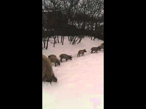 Кимры претендуют на рекорд России
