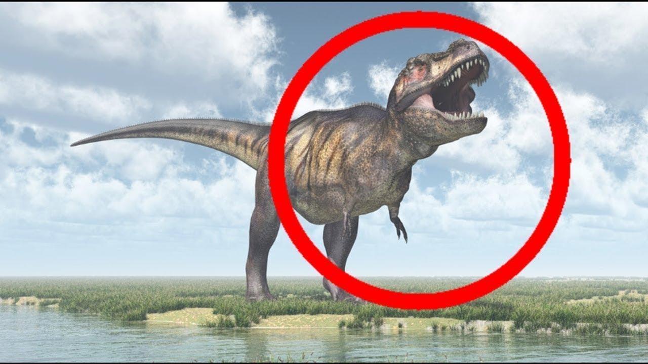 5 أدلة على أن الديناصورات مازالت موجودة حتى اليوم !!
