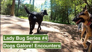 #4 German Shepherd's interactions with other dogs - Lady Bug Series Part 4