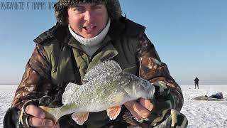 ТРОФЕЙНЫЕ ОКУНИ НА БЕЗМОТЫЛКУ ОТКРЫЛСЯ НА оз КОПА Зимняя рыбалка 2020 Казахстан Кокшетау оз Копа