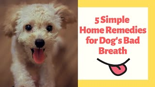5 Simple Home Remedies for Dog's Bad Breath