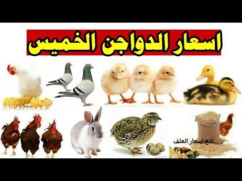 اسعار الكتاكيت اليوم الخميس 20/2/2020 بورصه الدواجن/البط/الارانب/السمان/الحمام/البيض/الاعلاف