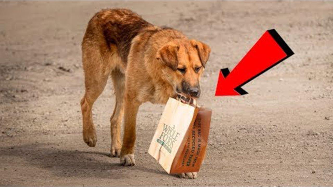 كل يوم يأتي هذا الكلب الى الناس بحثا عن الطعام ، ثم يضعه في حقيبة ويرحل