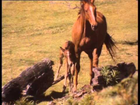 Brumby Horse Run Wild