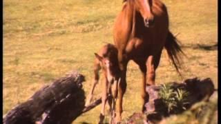 Repeat youtube video Brumby Horse Run Wild