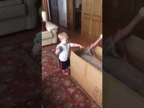 Nathan Gets a Bear