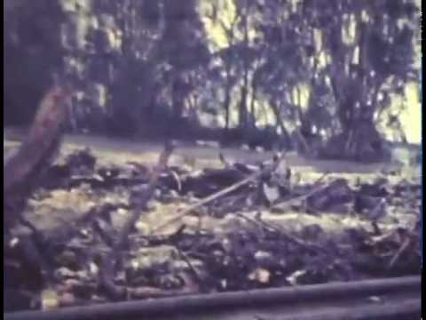 Video footage Cyclone Ada 1970