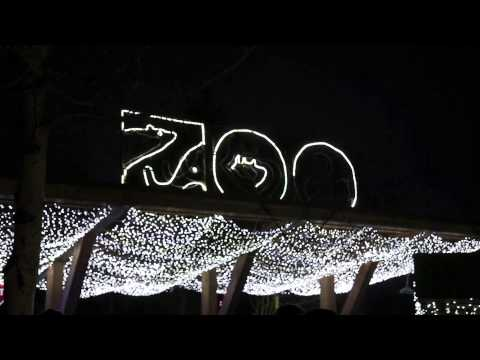 Will You Marry Me Jason Derulo Oregon Zoo Lights Flash Mob