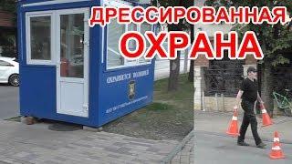 """""""Добрый сосед и дрессированная охрана !""""  Краснодар // Trained guards !""""  Krasnodar"""