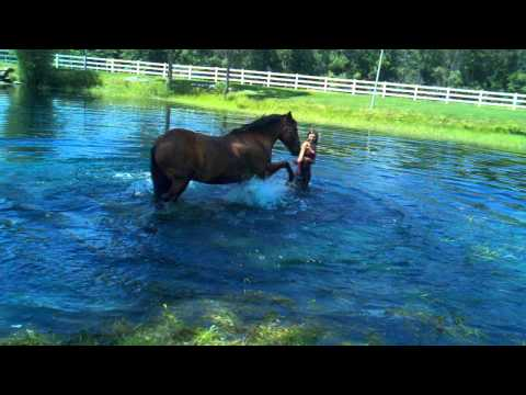 Truman swimming at willow pond stable