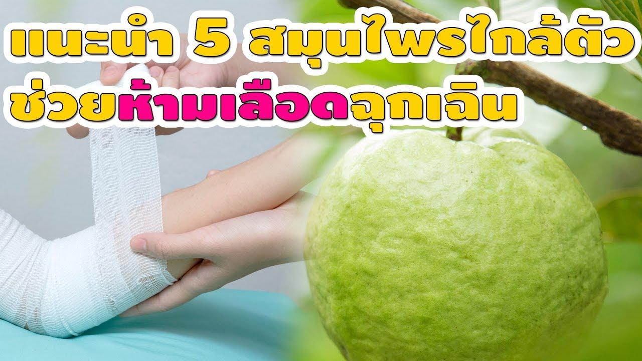 สุดยอด 5 สมุนไพรไทย ช่วยห้ามเลือดฉุกเฉิน รักษาแผลสด