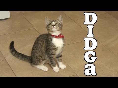 Didga's Adorable Kitten Compilation
