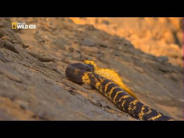 Los Animales Mas Peligrosos del Planeta HD - National Geographic