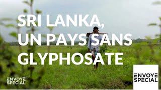 Envoyé spécial. Sri Lanka, un pays sans glyphosate - 17 janvier 2019 (France 2)