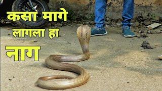 कसा मागे लागला हा नाग पहाच नक्की Indian Specialed Cobra Rescue By Saidas Kusal