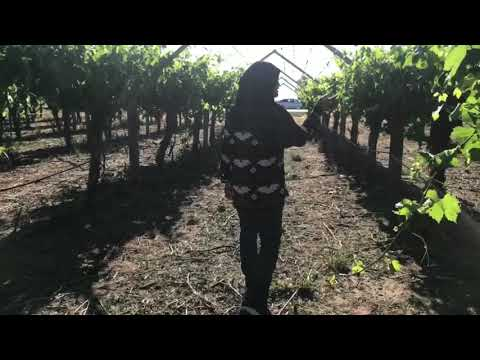 Perth Vacation Grape Farm Swan Valley | DJI Osmo Mobile