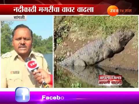 Sangli   Police Begins Search Operation To Find Boy Attacked By Crocodile
