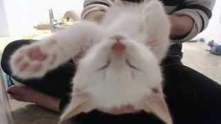 Adorable rescue kittens purring SO loud!  (best kitten therapy ever) thumbnail