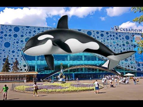 Водное шоу в Московском океанариуме