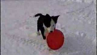 This Video Is Unavailable.     Dawgin: Heir Part Ii Puppy Frisbee Dog Training 8-24 Weeks