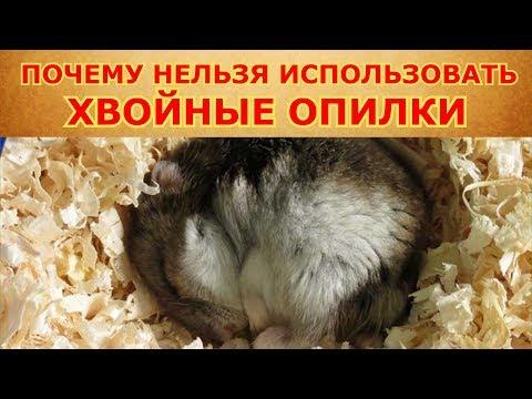 Почему хвойный наполнитель вреден для грызунов?