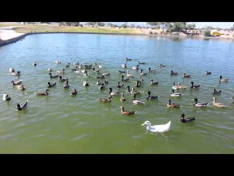 Friendship Park Avondale, AZ