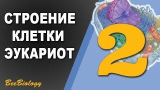 Урок по Биологии №2 - Строение клетки / Клетка Эукариот