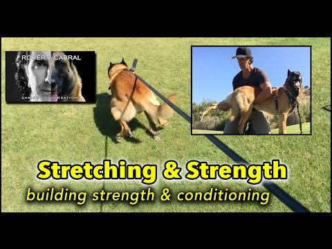 Stretching & Drag Line Training for Strength Conditioning - Dog Training and Health