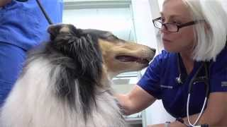 Take Paws: Heat Exhaขstion with Dr. Marilyn Moles-Carlisle