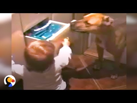 Dog Stops Baby From Opening Drawer | The Dodo
