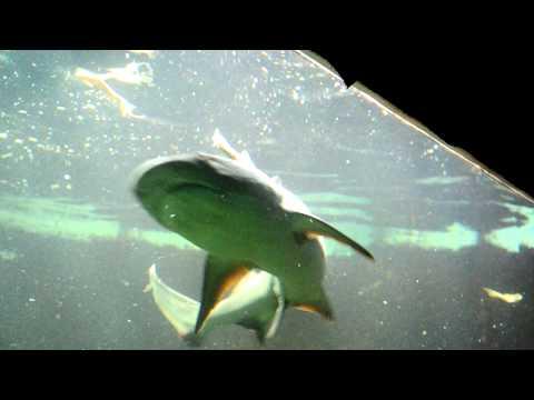 Sharks feeding - Cleveland Metroparks Zoo