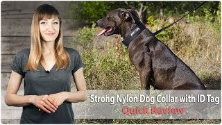 Walking And Training Nylon Dog Collar With Id Tag - Quick Review