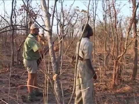 African Plains Game on the Dark Continent  Hunting Lion Antelope