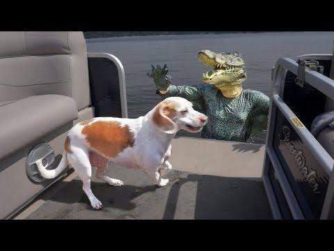 Crocodile Man Pranks Dog on Lake: Funny Dog Maymo