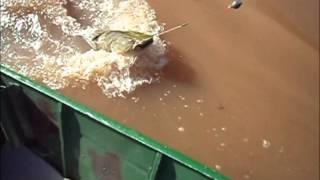 Pescaria Cacoal Rondônia Rio Machado Dias 02 e 03 de Novembro de 20131