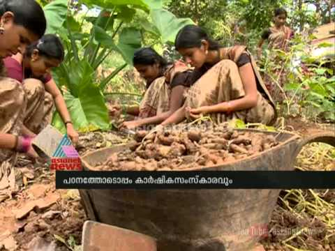 Chittur Government T.T.I. model of Organic farming : Chuttuvattom News