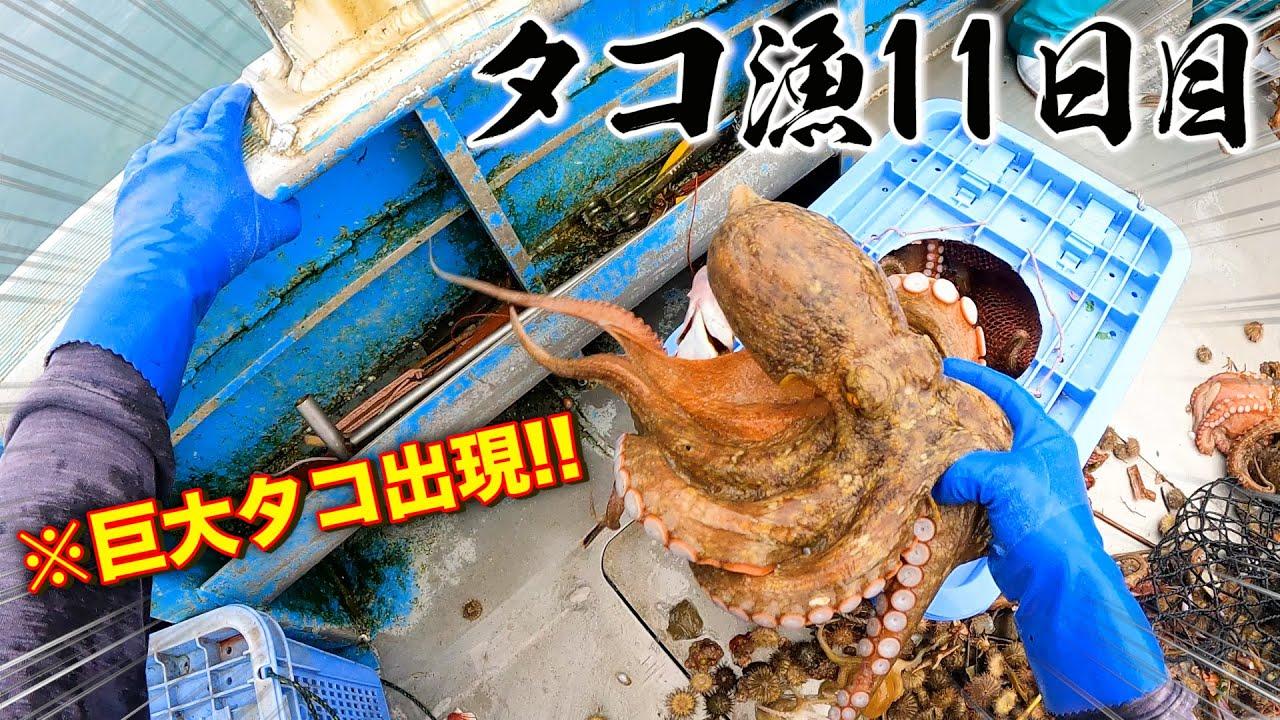 【タコ漁11日目】今季最大クラスのタコ出現!?夕食は過去イチのスピードでかき込んでしまった絶品〇〇丼!