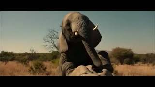 Братья из гримсби , момент слон трах.ет слониху комедия 2016