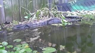 My pond  (Still needs a lot of work but well established)